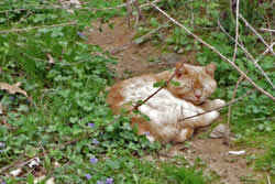 cat lying in the dirt